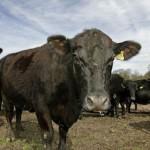 биржа скота бобров воронежской области
