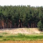 хвойные леса Бобров