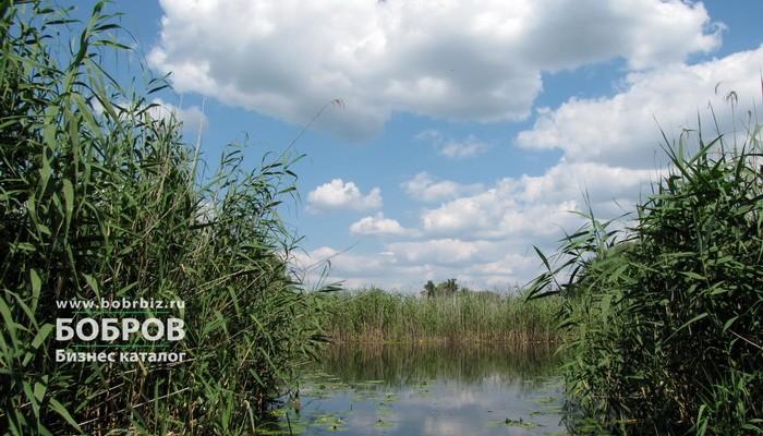 река битюг бобров