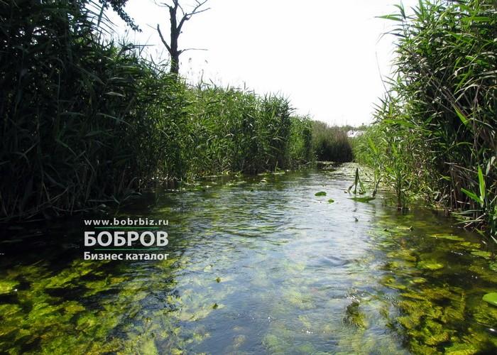 река битюг бобров байдарки