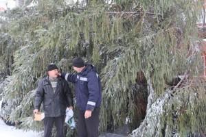 В Боброве поставили новогоднюю ель