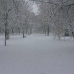 зимний парк в боброве