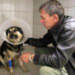 нападение на собаку