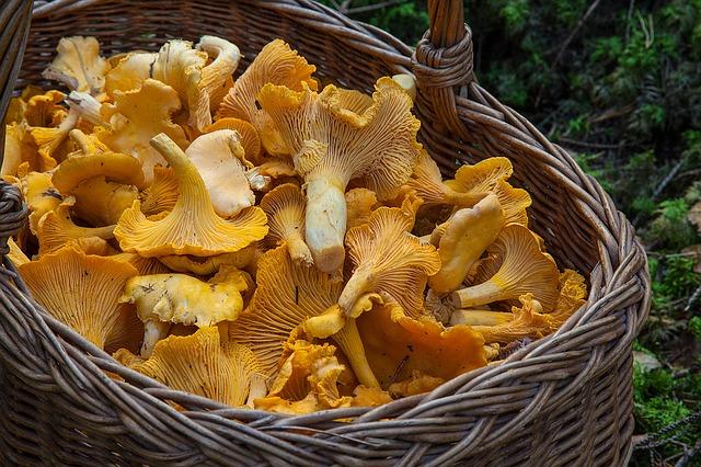 корзина с грибами сыроежками