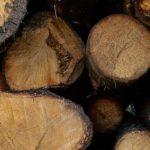ооо бобров лес пилорама