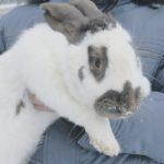 зоопарк крестьянский дворик кролик пёстрый великан