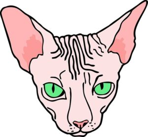мужчина в боброве отрезал голову кошке сфинксу